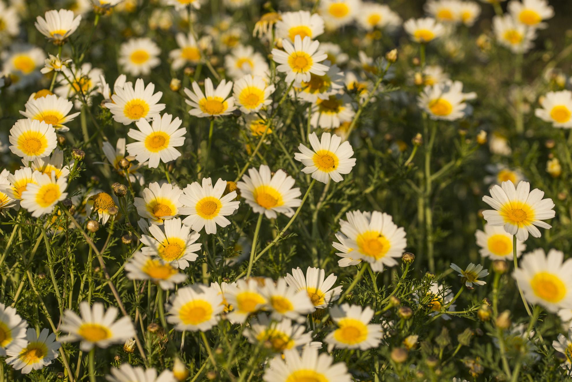 Wild Flowers-624