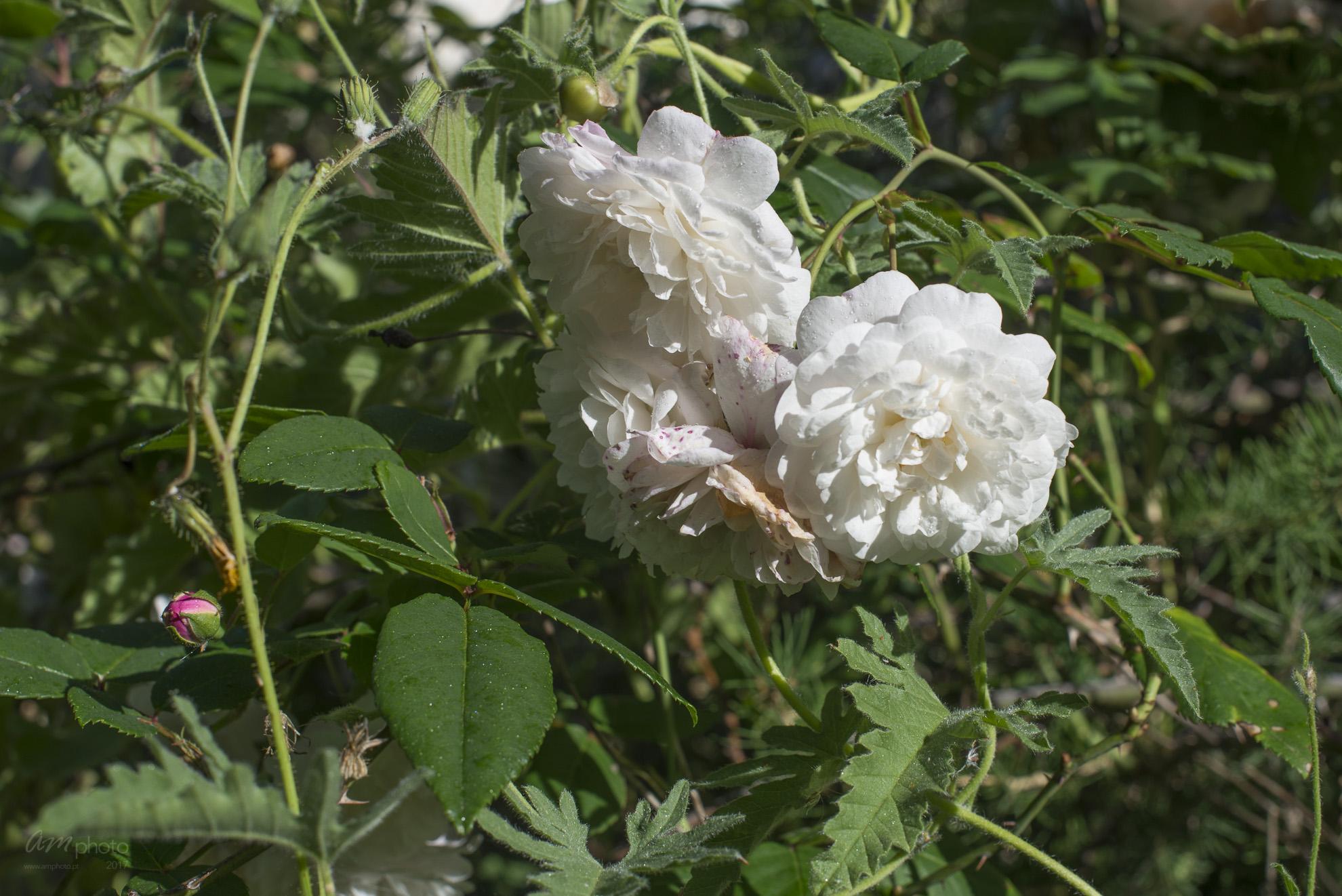 Wild Flowers-24