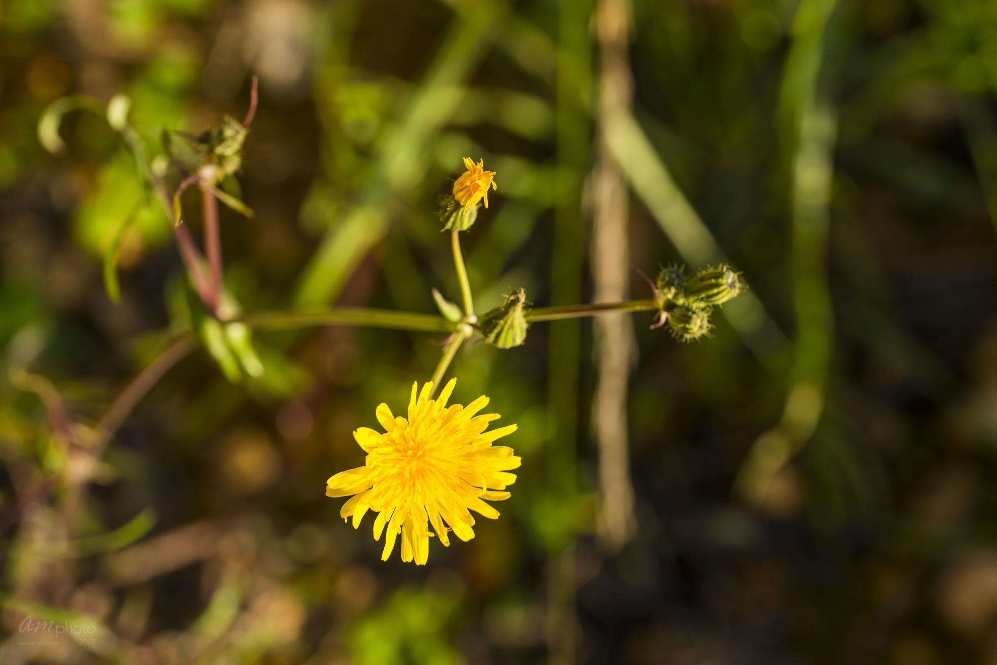 Wild Flowers-648