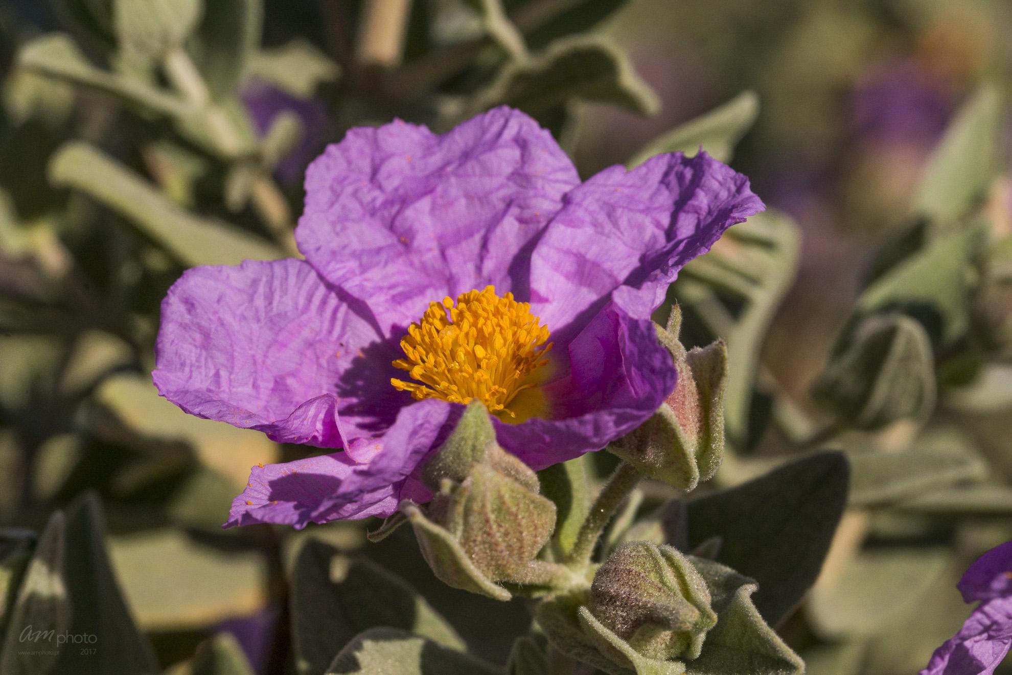 Wild Flowers-584