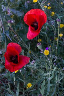 Wild Flowers-228