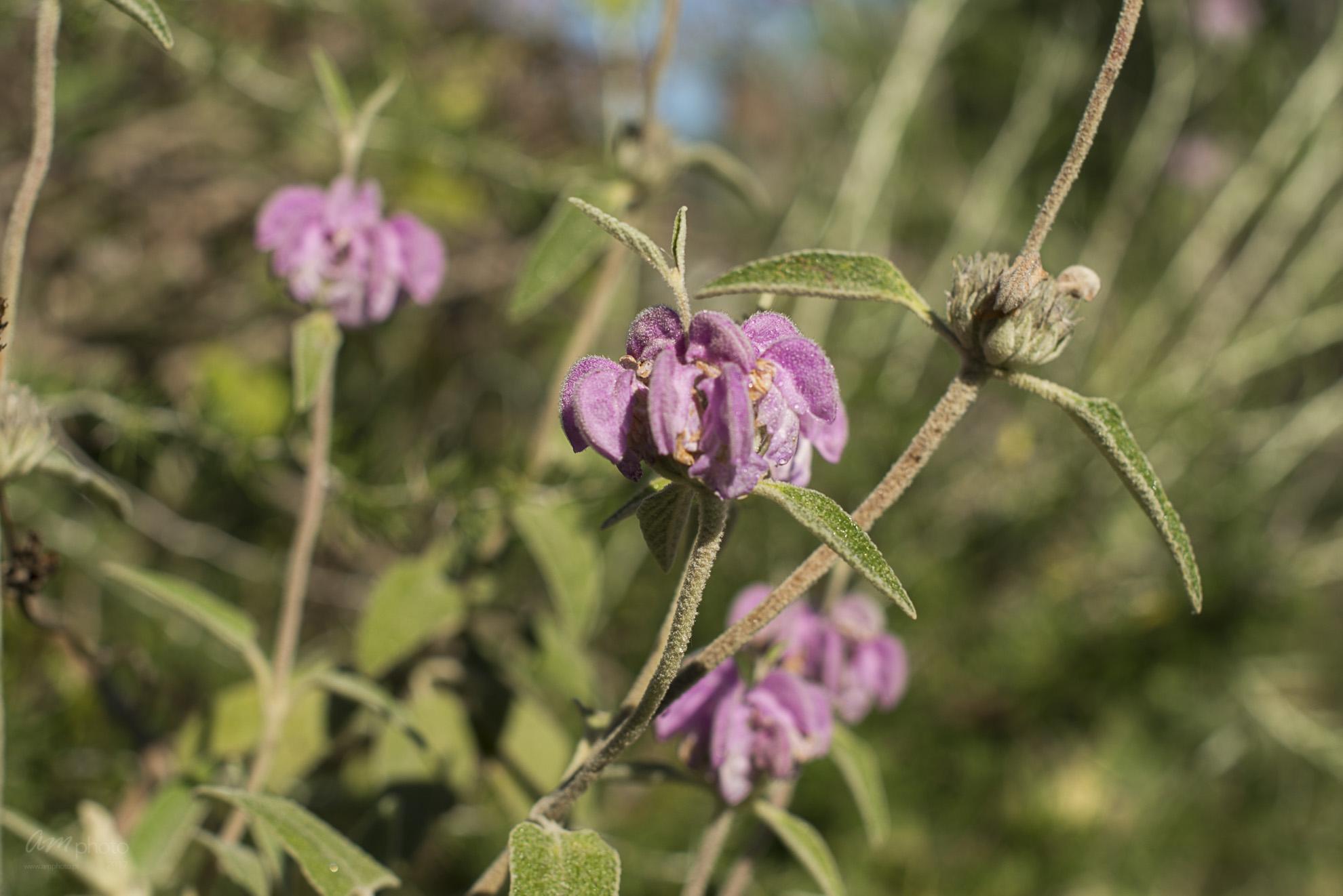 Wild Flowers-267