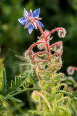 Wild Flowers-330