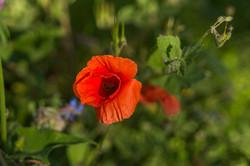Wild Flowers-342