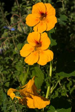 Wild Flowers-304