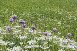 Wild Flowers-68