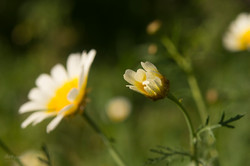 Wild Flowers-341