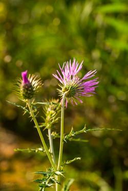 Wild Flowers-650