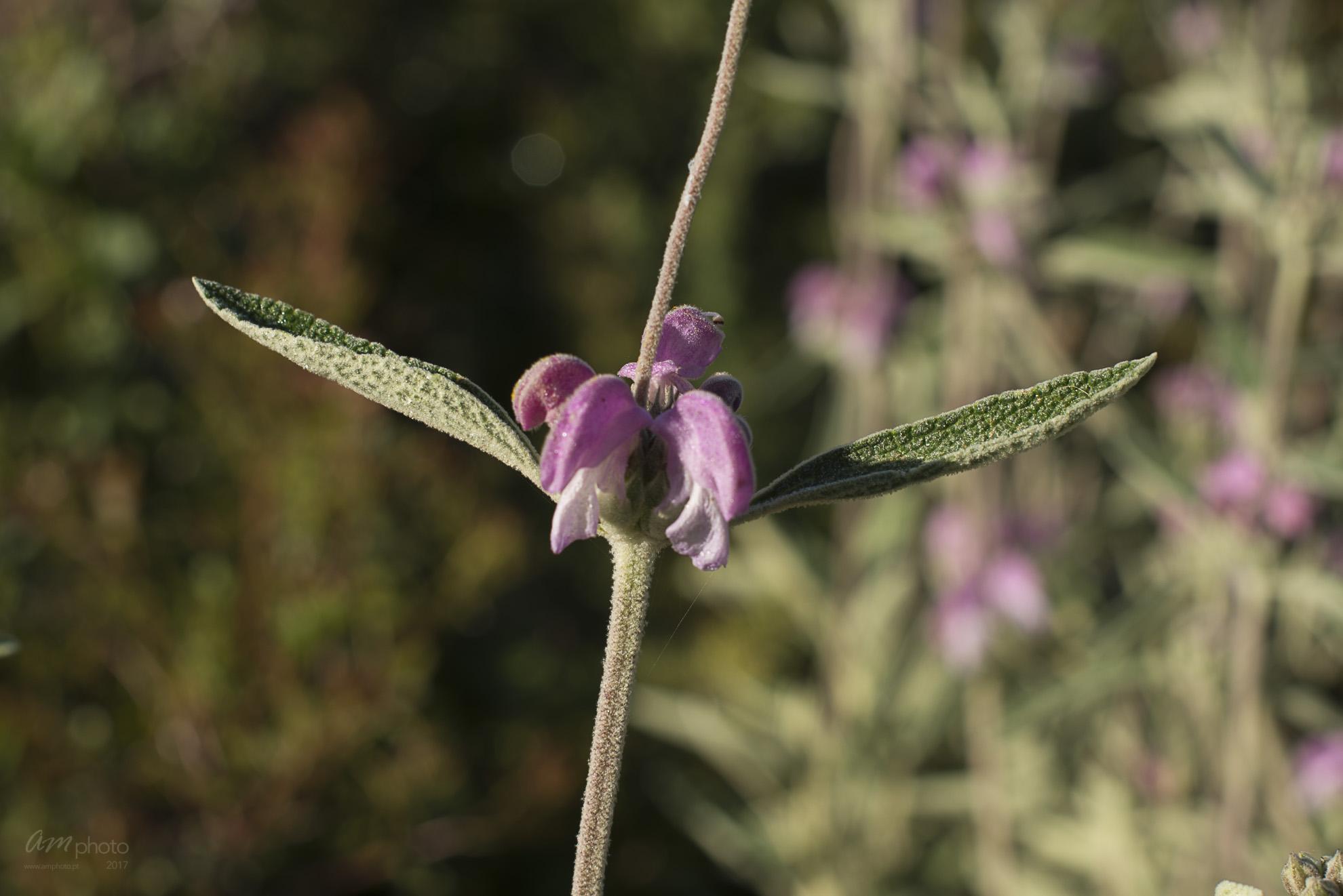 Wild Flowers-265
