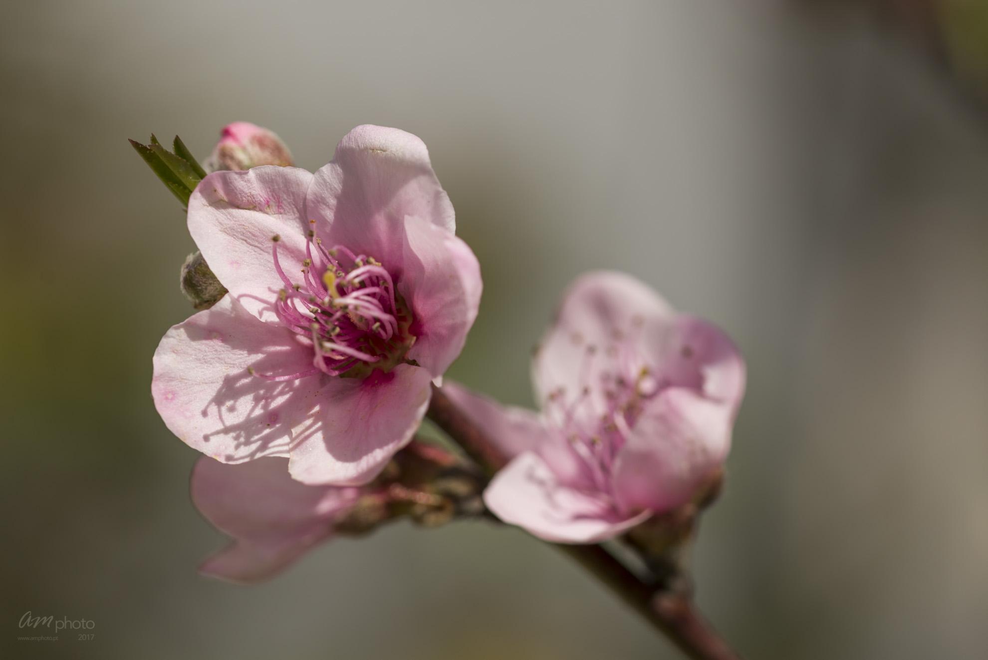 Wild Flowers-735