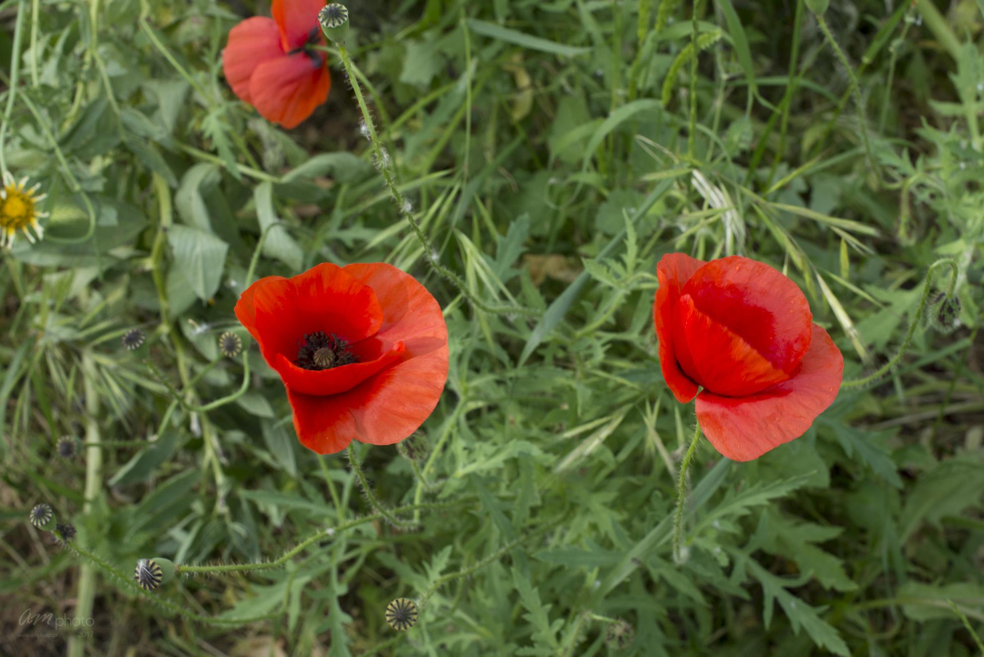 Wild Flowers-226