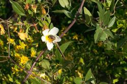 Wild Flowers-156