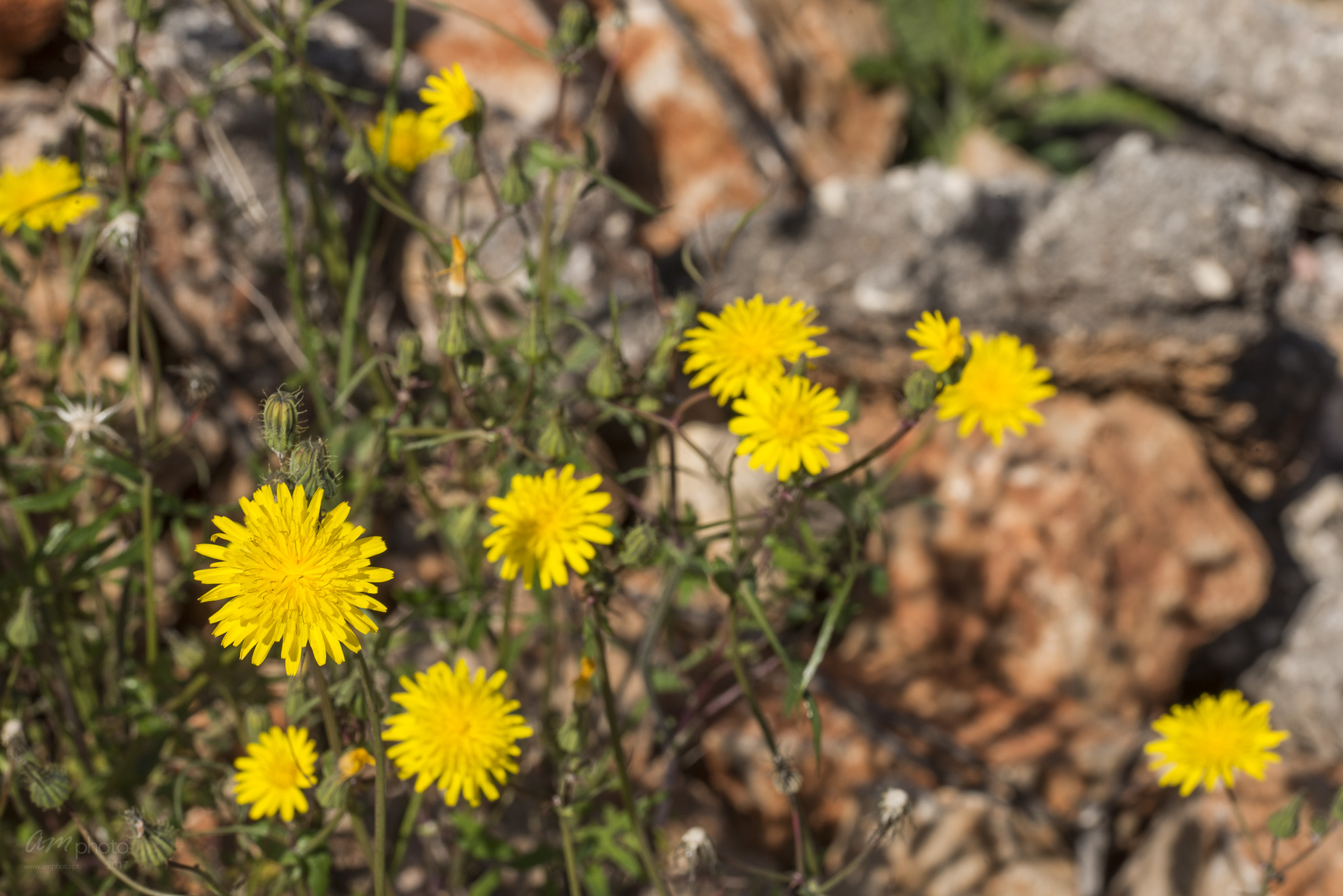 Wild Flowers-491
