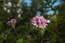 Wild Flowers-251