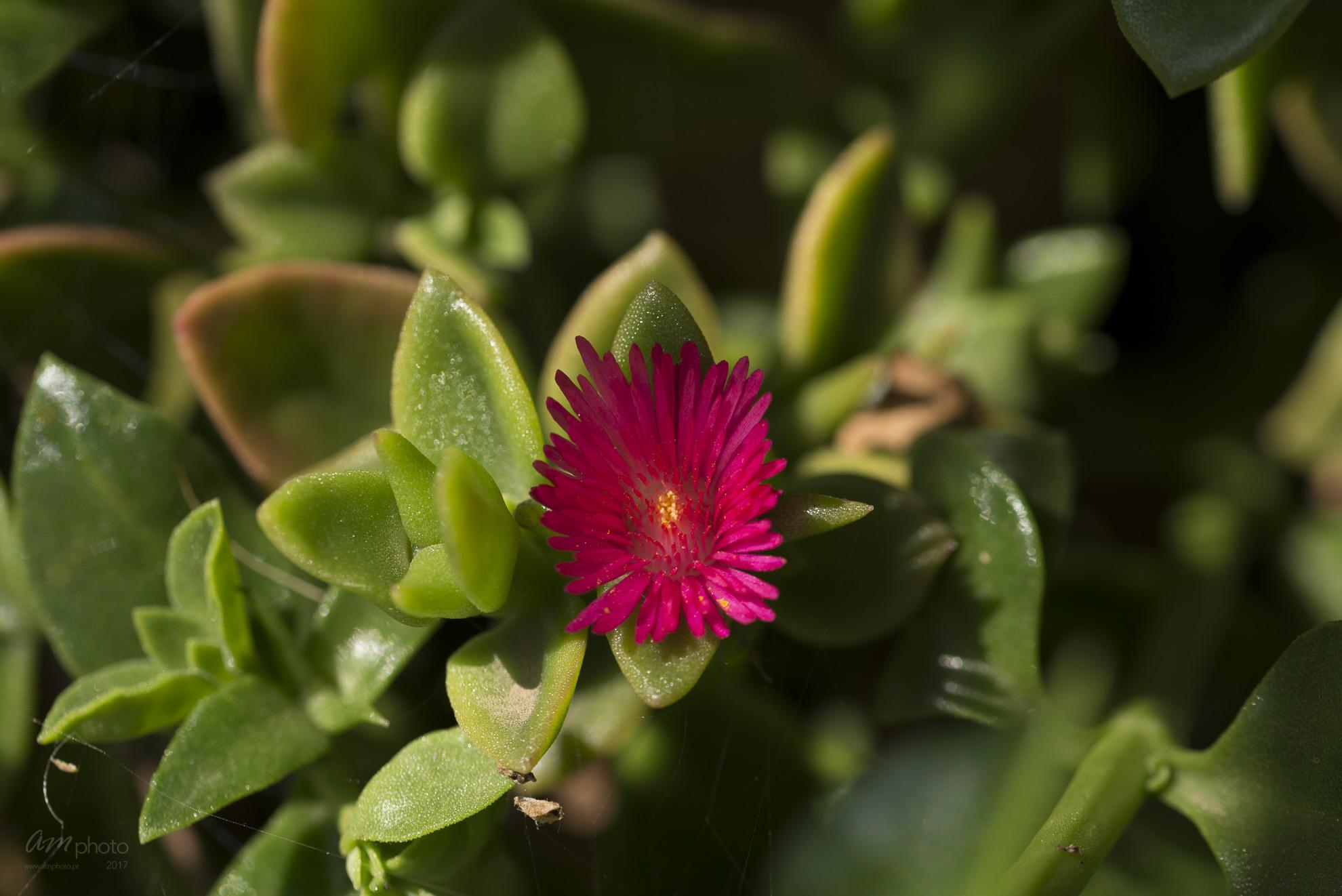 Wild Flowers-738