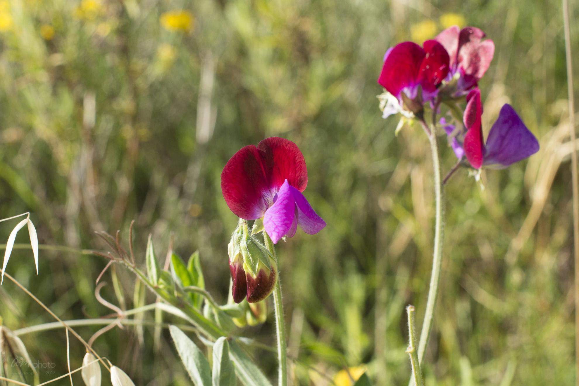 Wild Flowers-166
