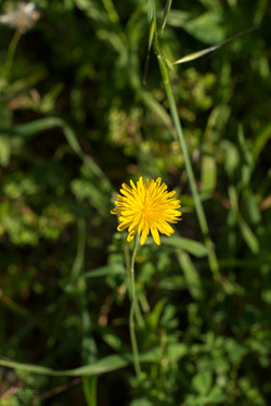 Wild Flowers-260