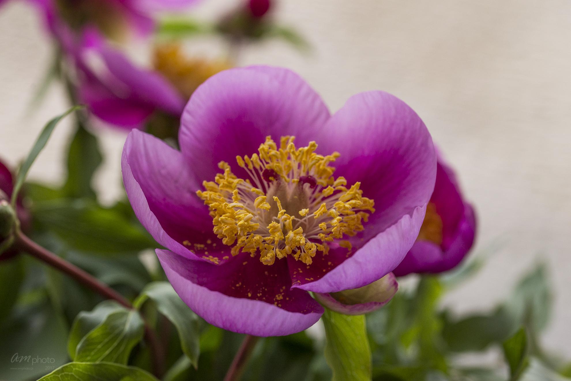 Wild Flowers-539
