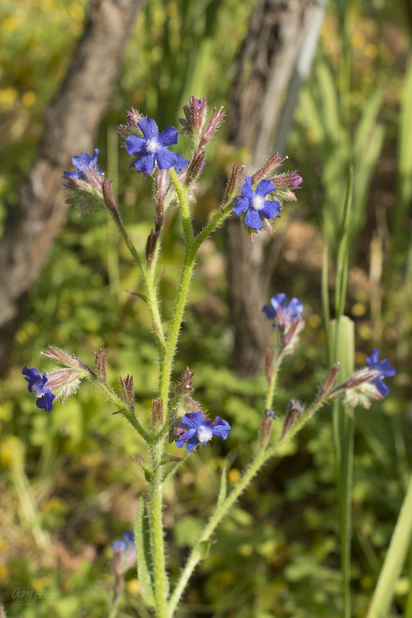 Wild Flowers-216