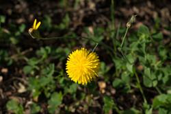 Wild Flowers-146