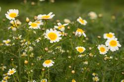 Wild Flowers-526
