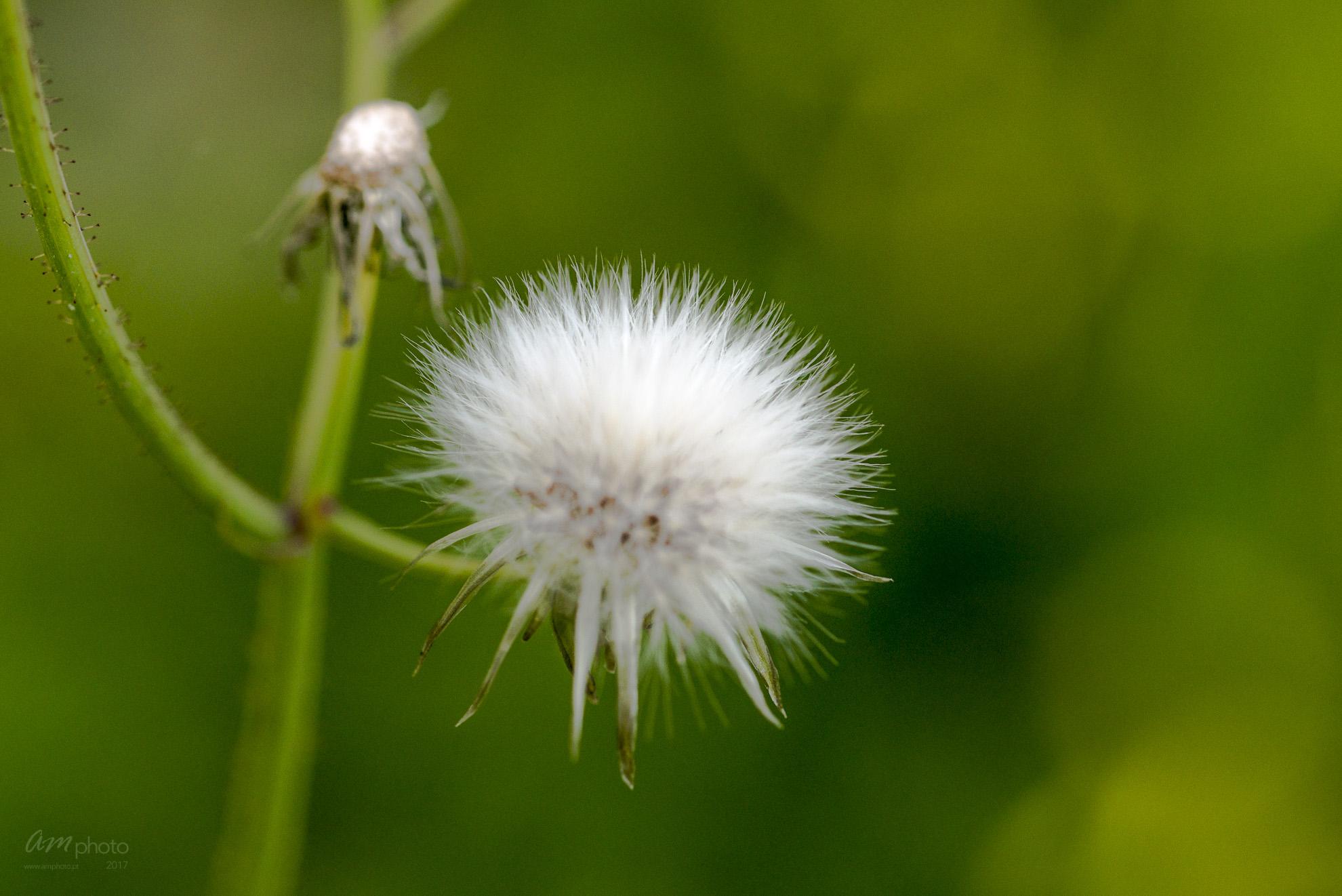 Wild Flowers-544