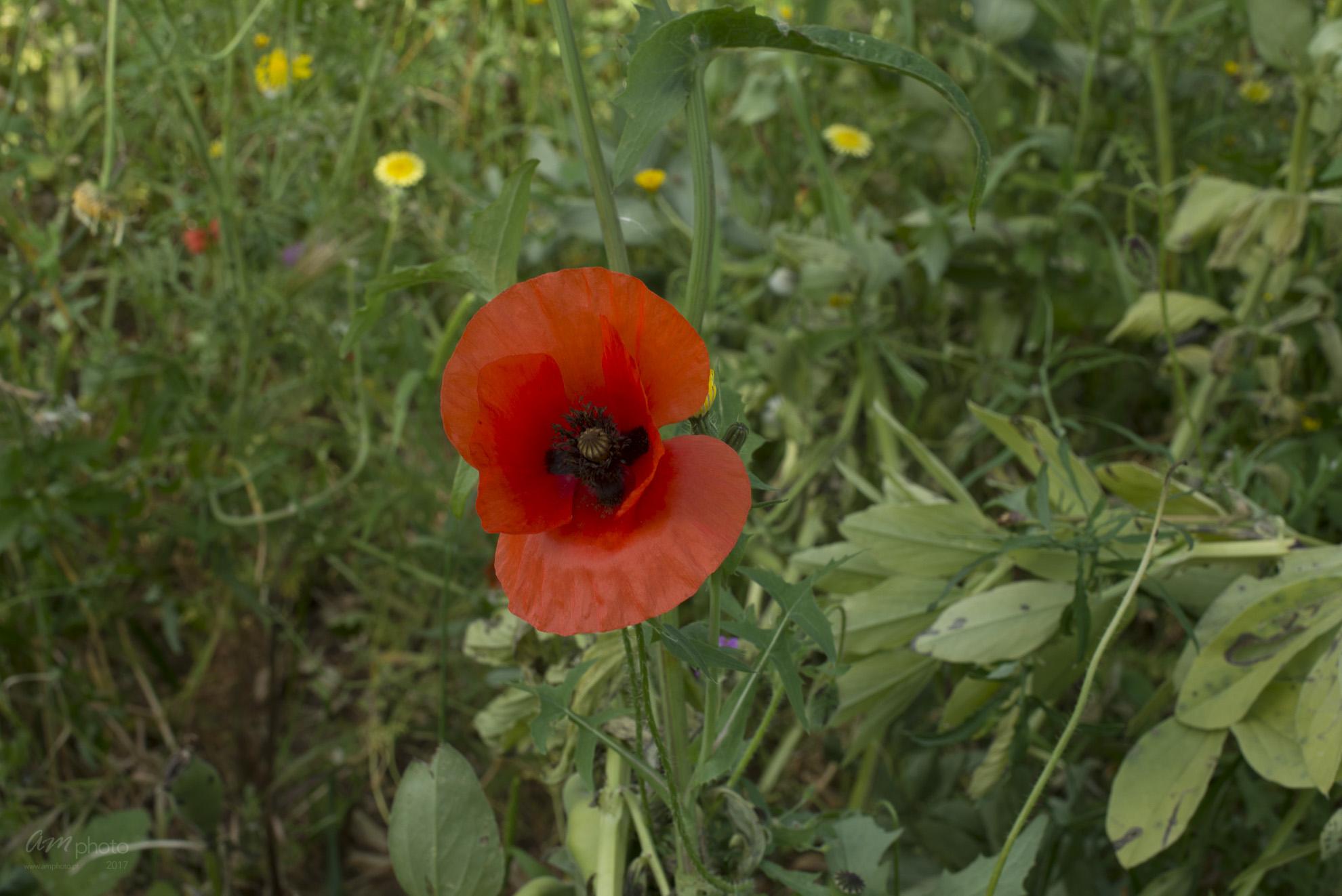 Wild Flowers-223