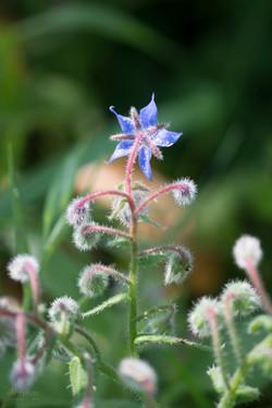Wild Flowers-392
