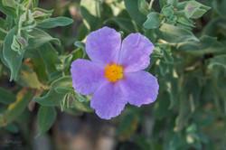 Wild Flowers-595