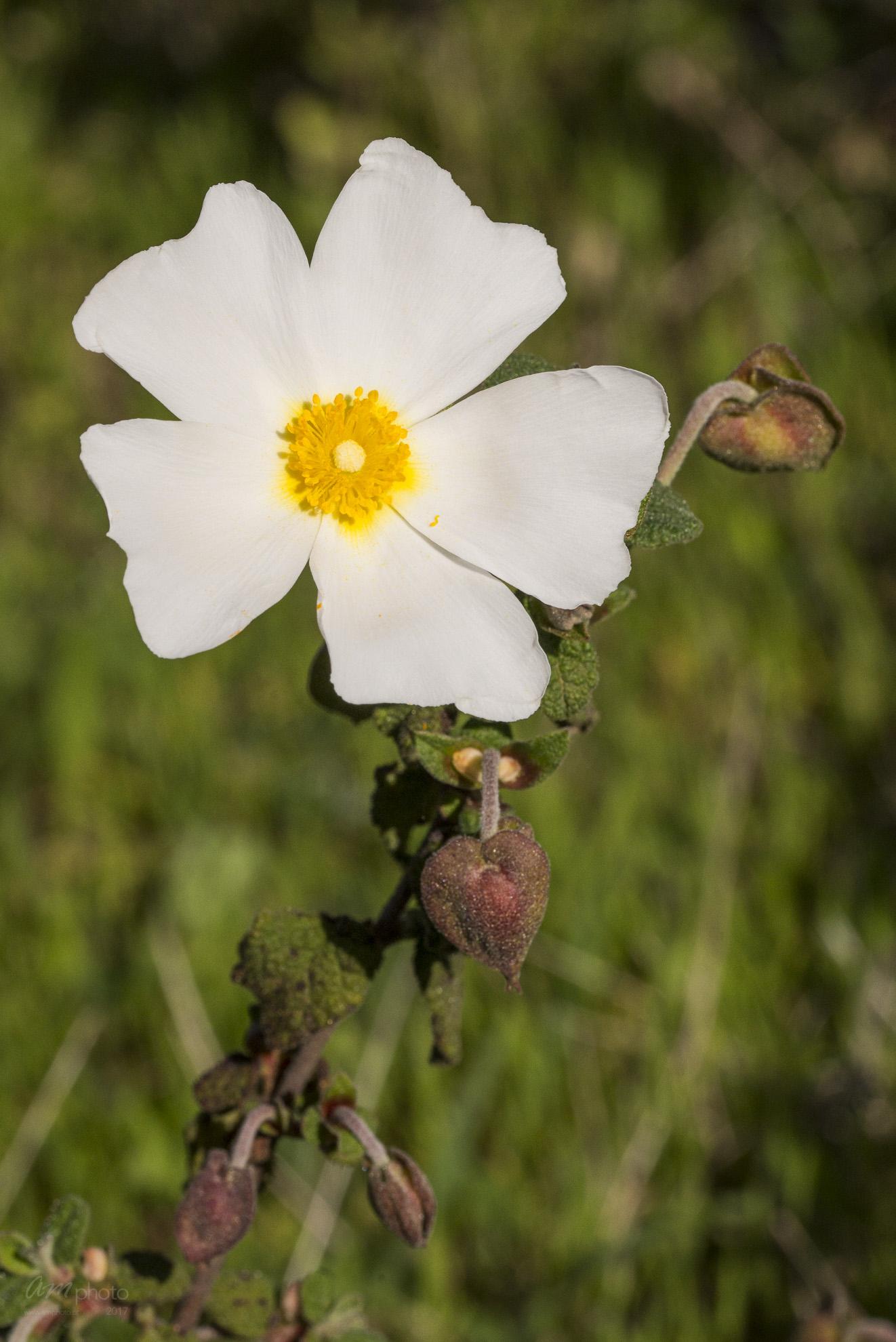 Wild Flowers-593