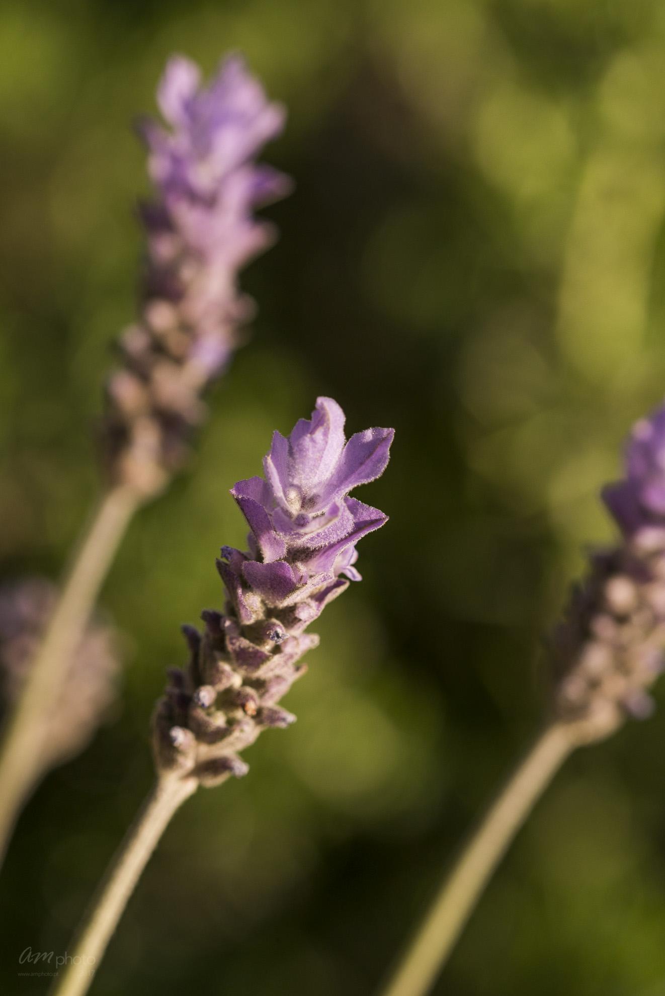 Wild Flowers-556