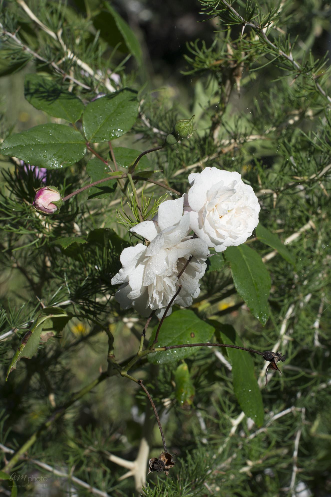 Wild Flowers-23