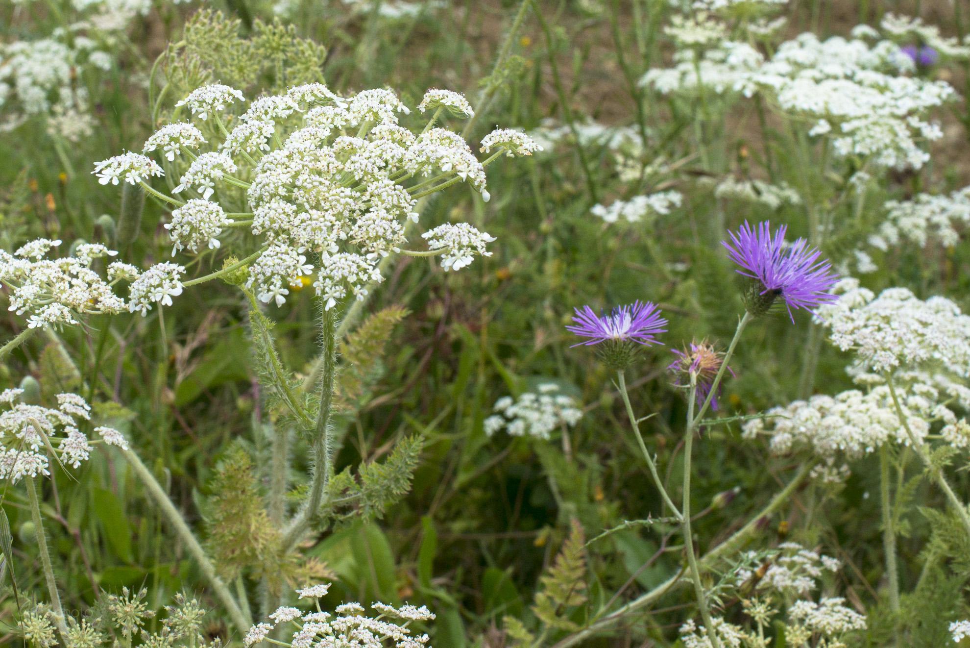 Wild Flowers-55