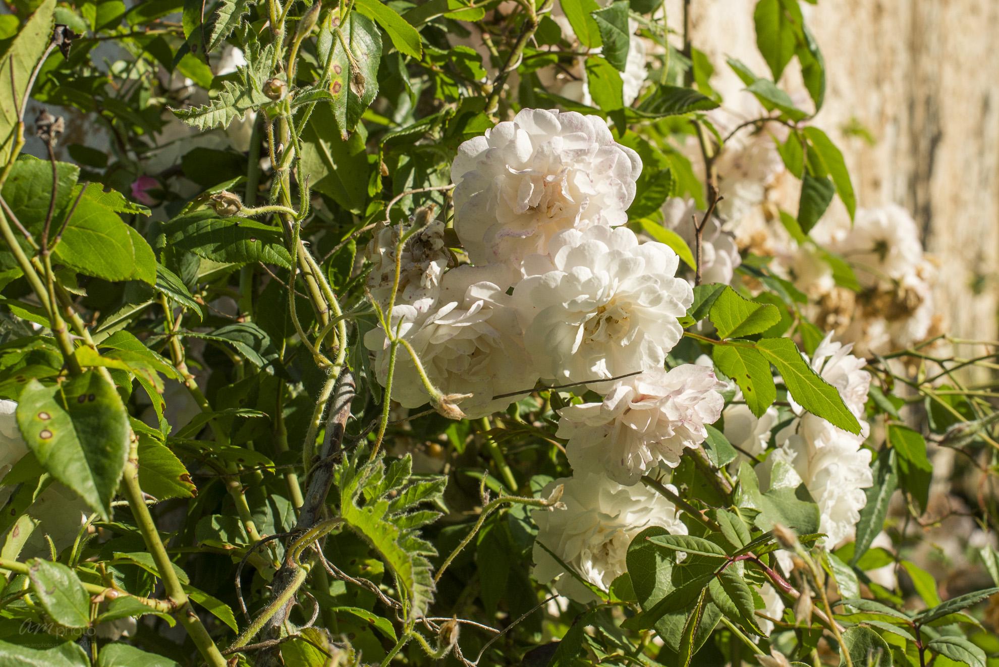 Wild Flowers-33