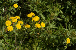Wild Flowers-138