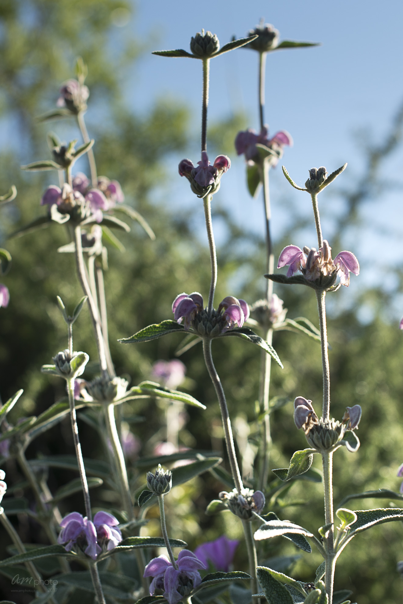Wild Flowers-268