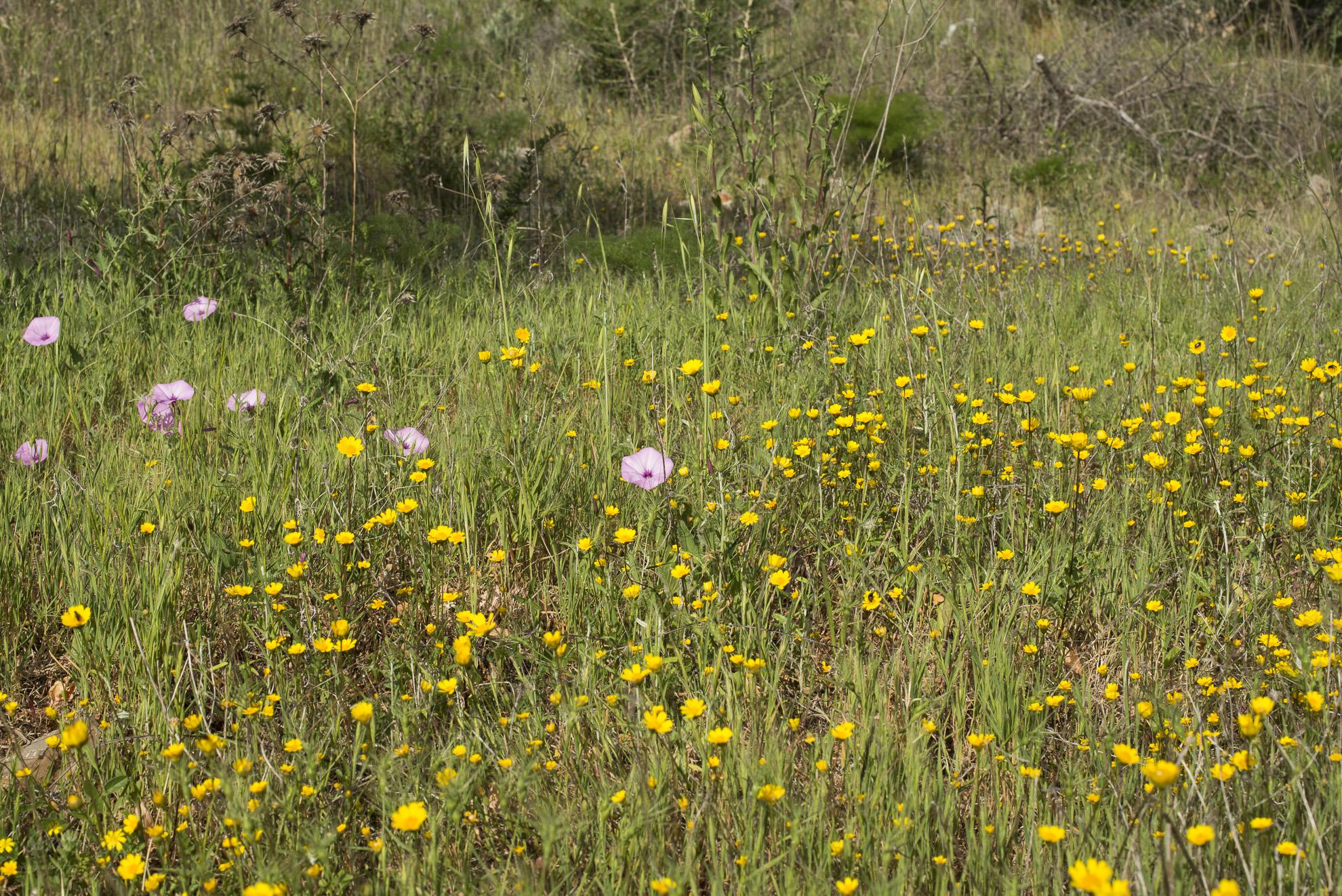 Wild Flowers-128