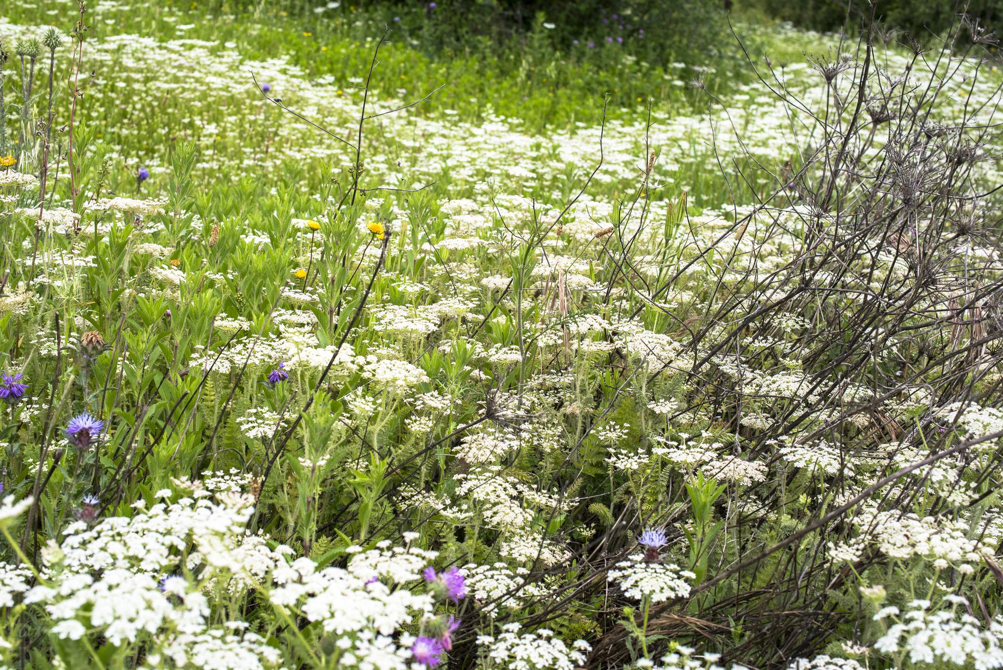 Wild Flowers-63
