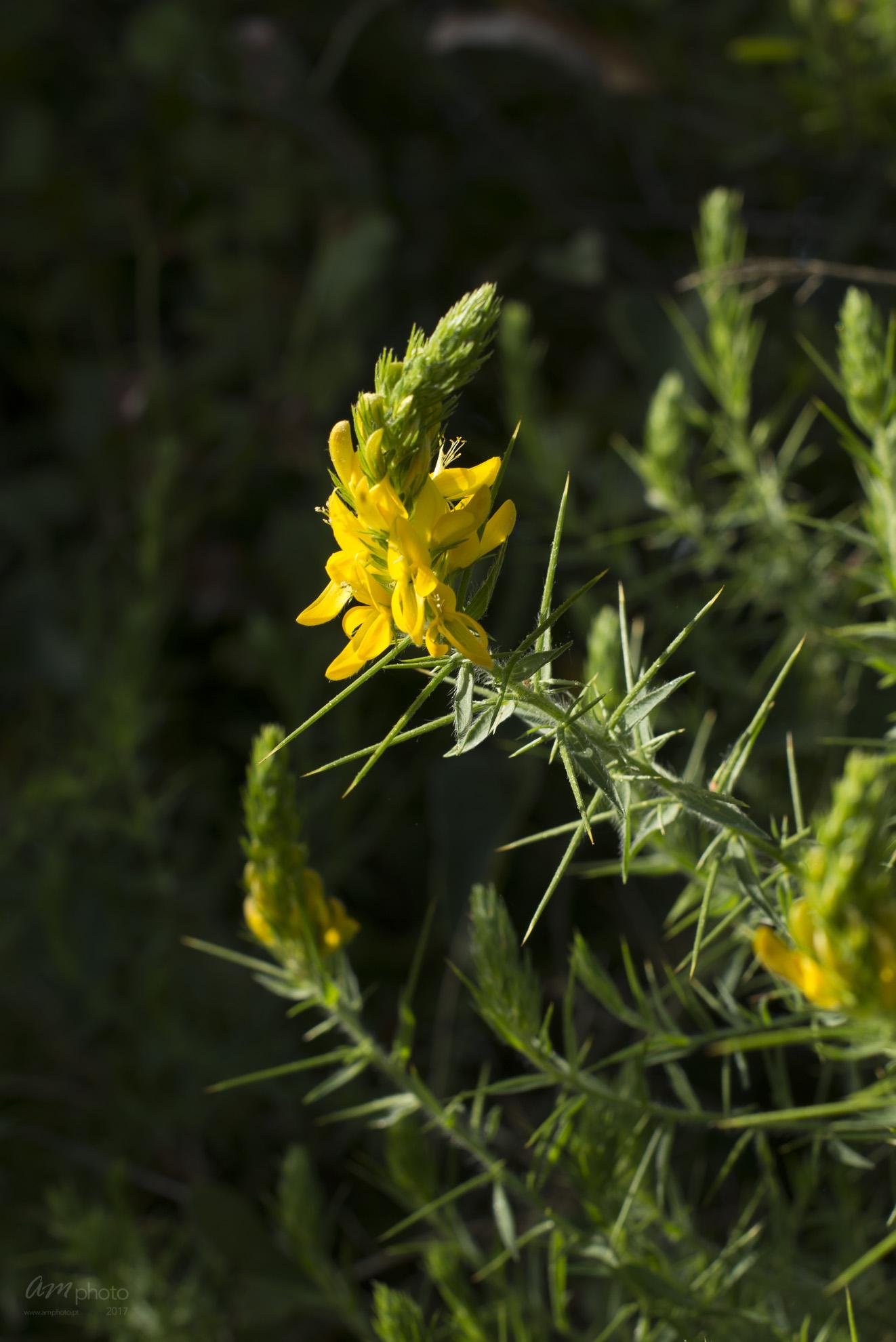 Wild Flowers-148