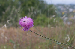 Wild Flowers-60
