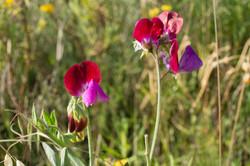 Wild Flowers-165