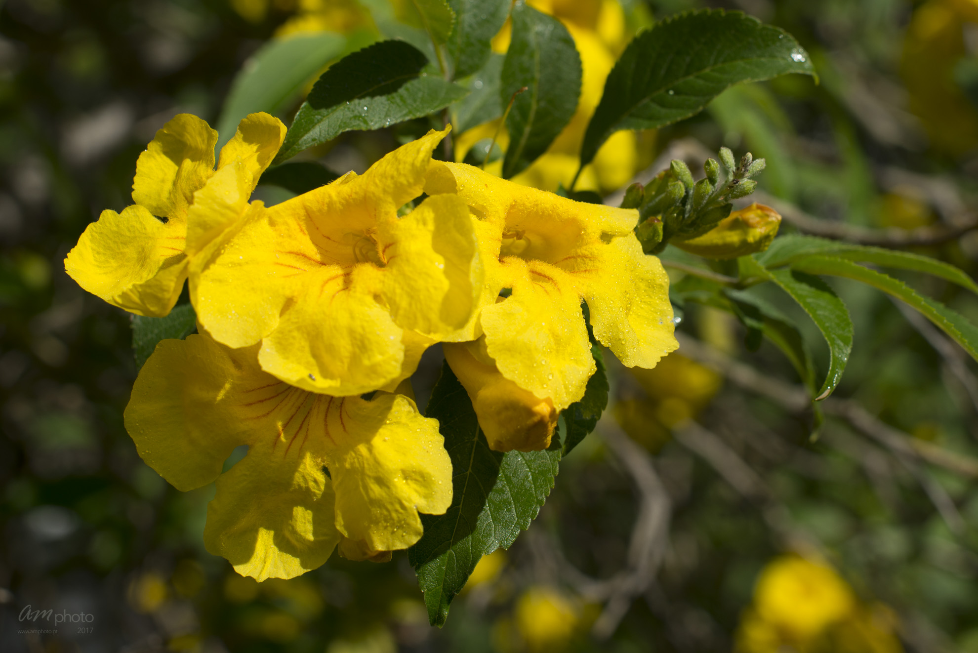 Wild Flowers-97