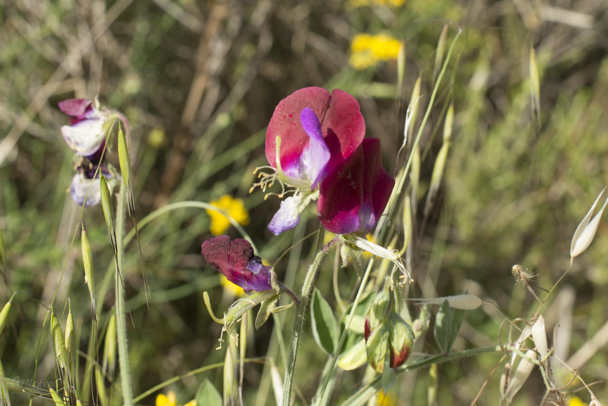 Wild Flowers-167