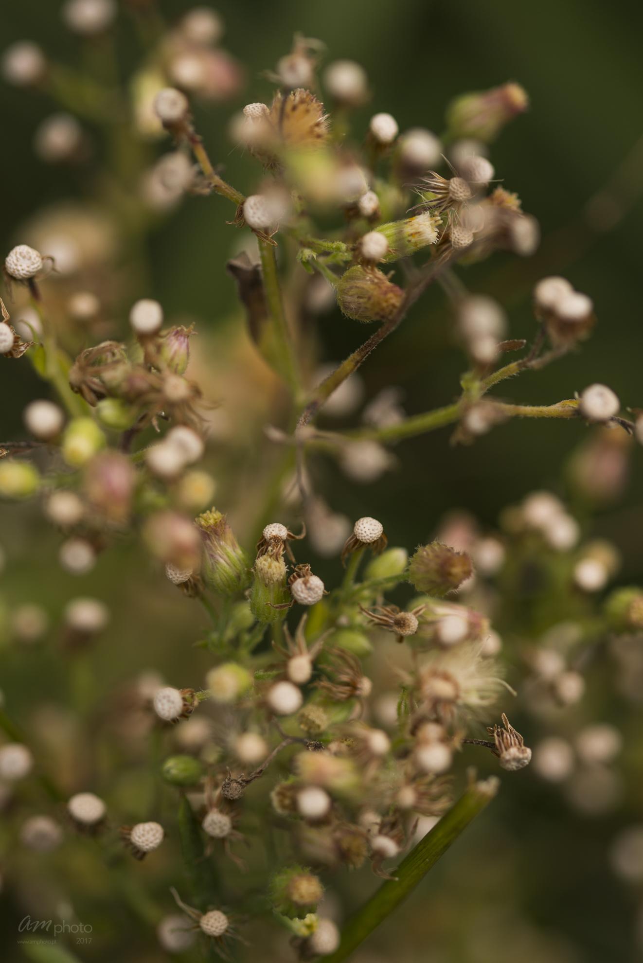 Wild Flowers-529
