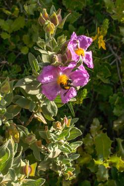 Wild Flowers-116