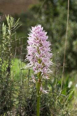 Wild Flowers-466