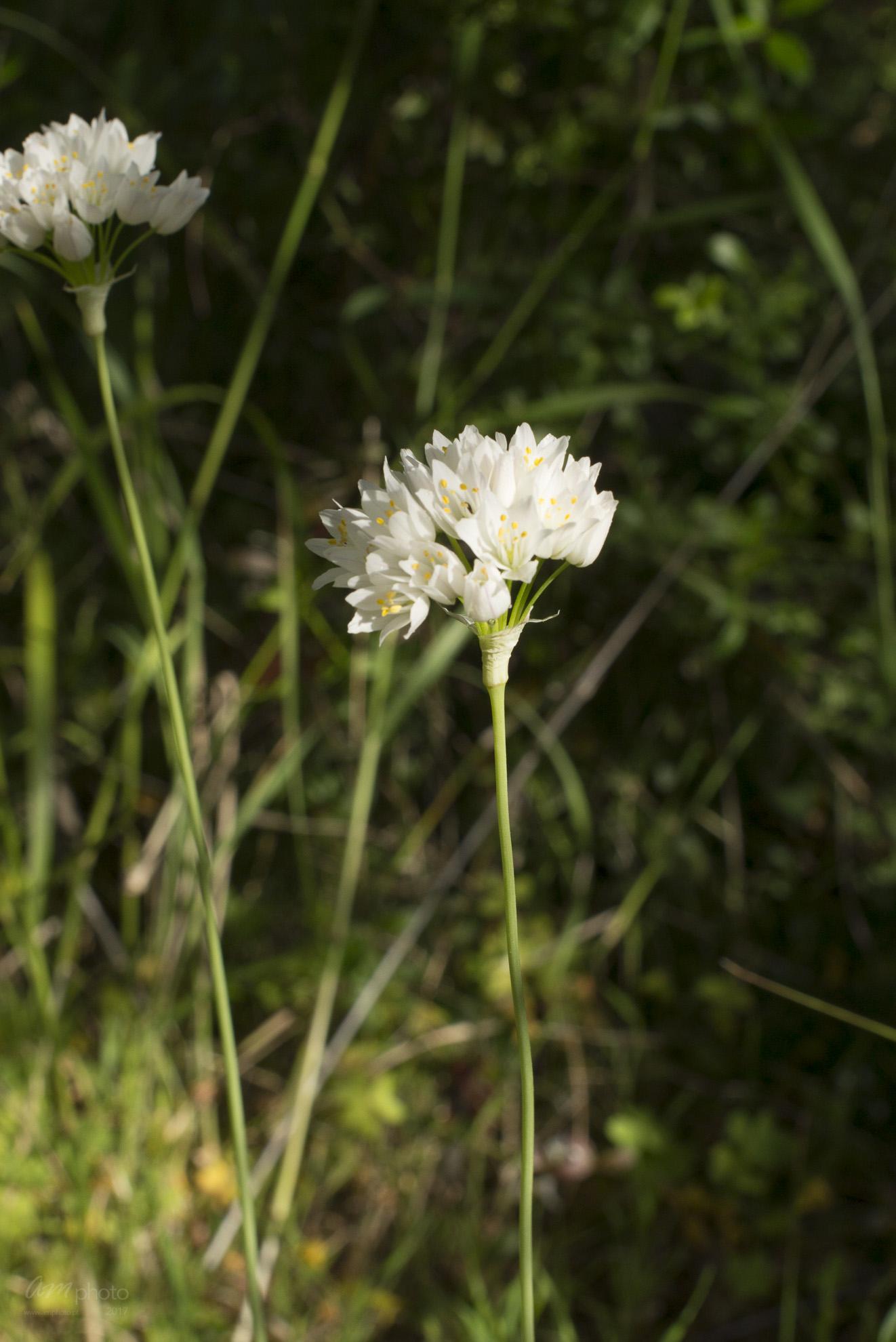 Wild Flowers-137
