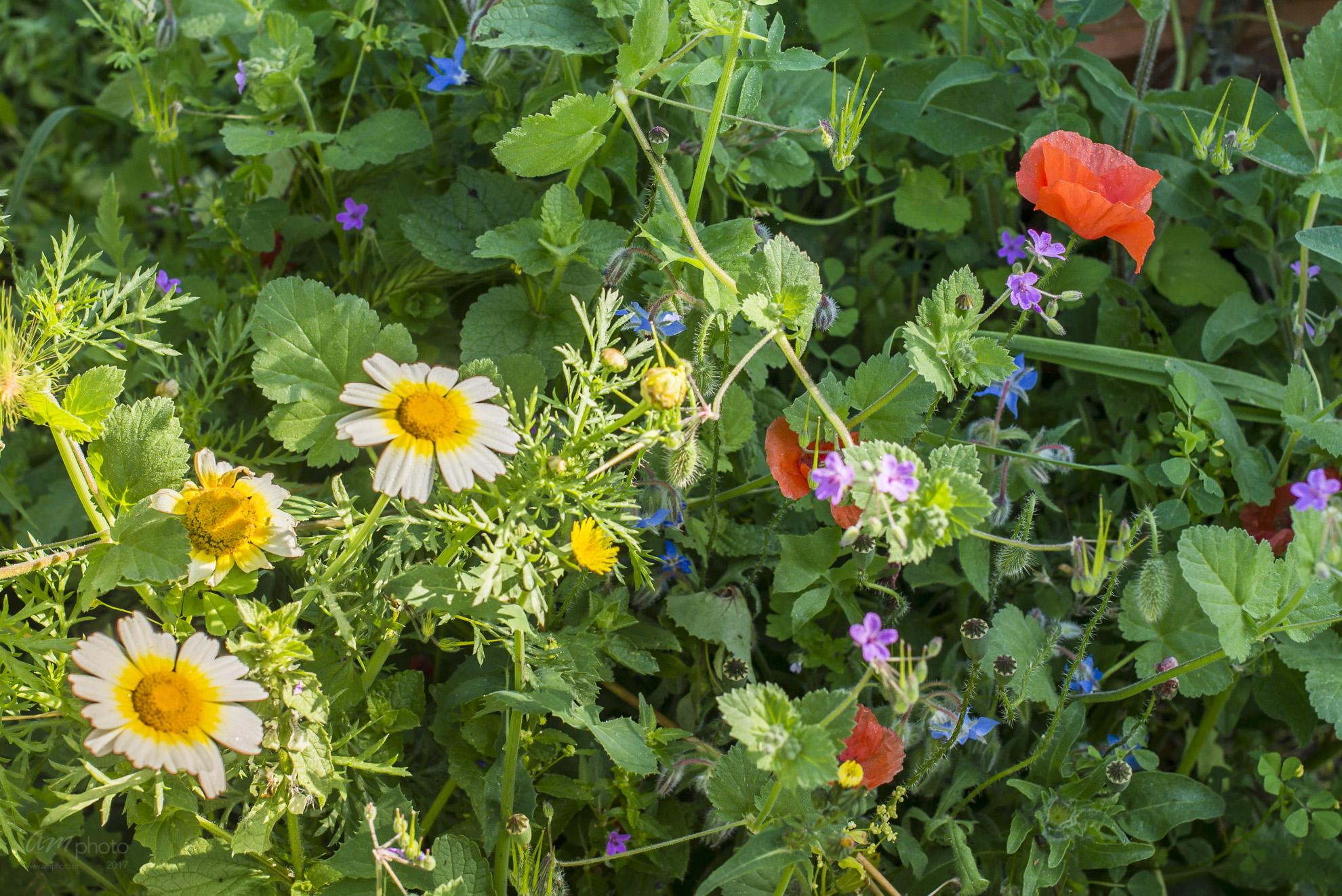 Wild Flowers-405