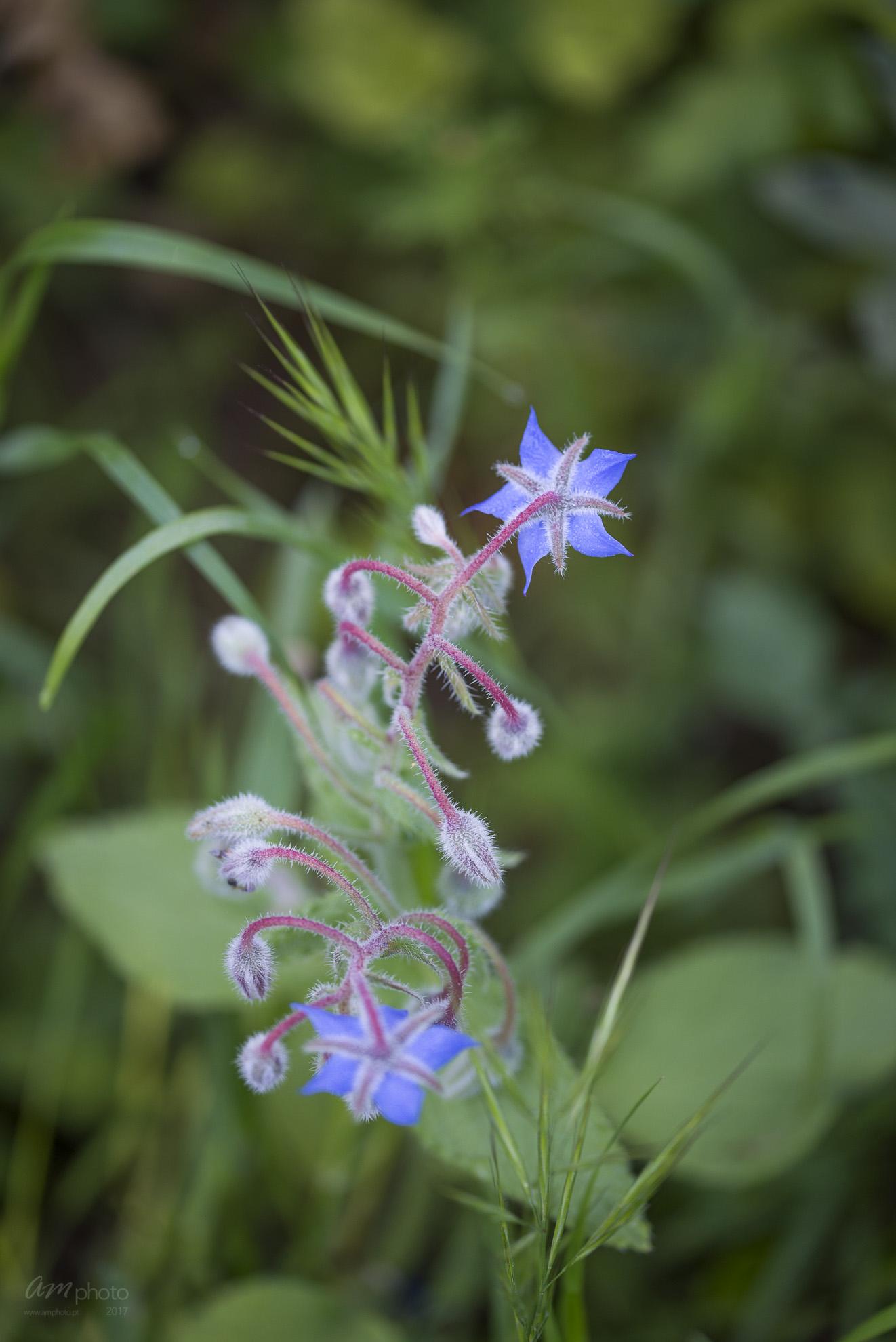 Wild Flowers-390