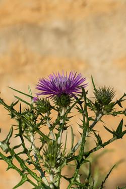 Wild Flowers-263